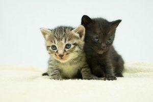 すりすりしながら自律神経を調整する仔猫たち