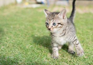 定位反応を持つゴキゲンな仔猫